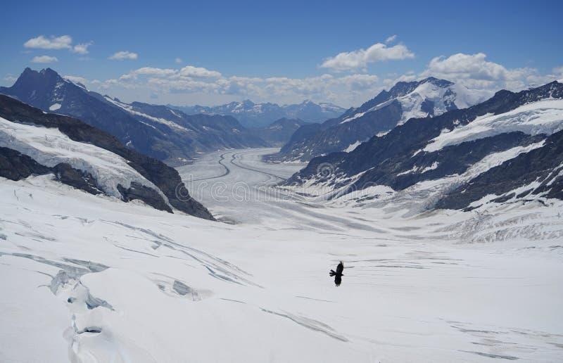 ледники стоковое фото rf