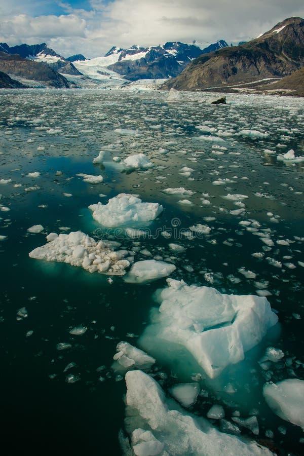 Ледник Колумбии в Prince William Sound, Аляске стоковое изображение