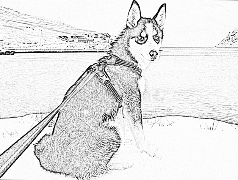 Ледовитая норвежская лайка - чертеж карандаша стоковые фотографии rf