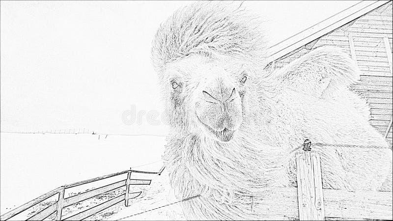 Ледовитый верблюд - чертеж карандаша стоковое изображение rf