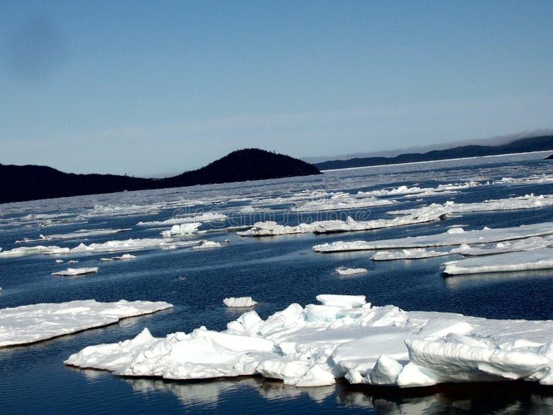 ледовитый льдед стоковые фотографии rf
