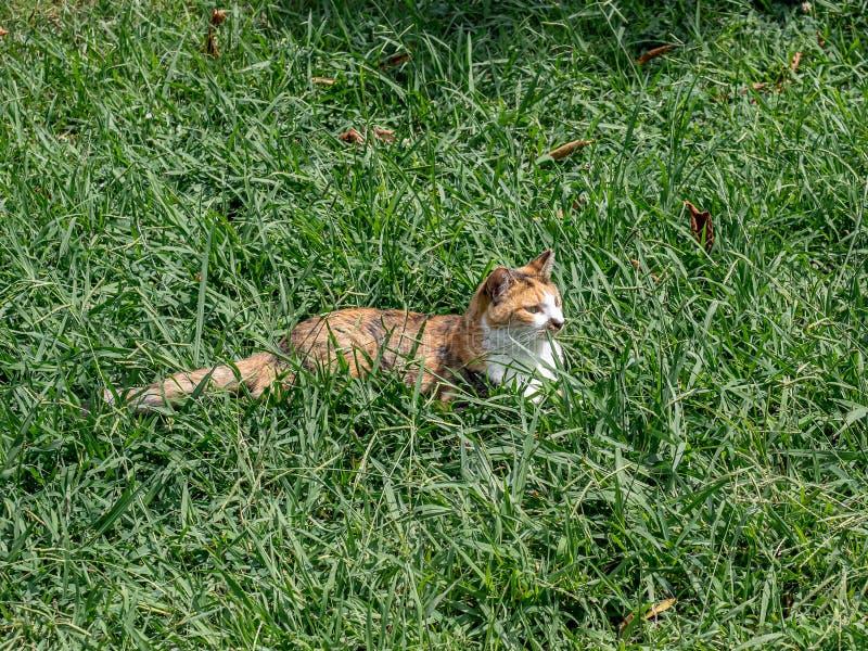 Ледяной кот в длинной траве стоковые изображения rf