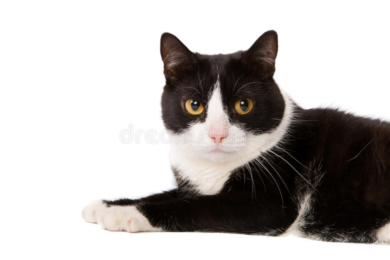 лежать кота стоковые фотографии rf