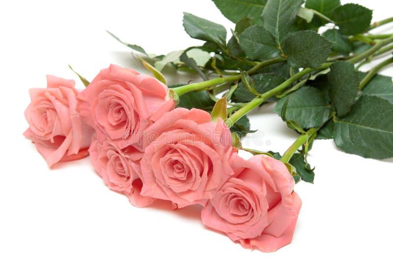 лежат розы 3 стоковое фото