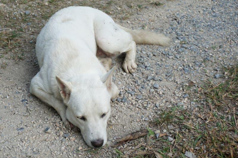 Лежа собака стоковые изображения rf