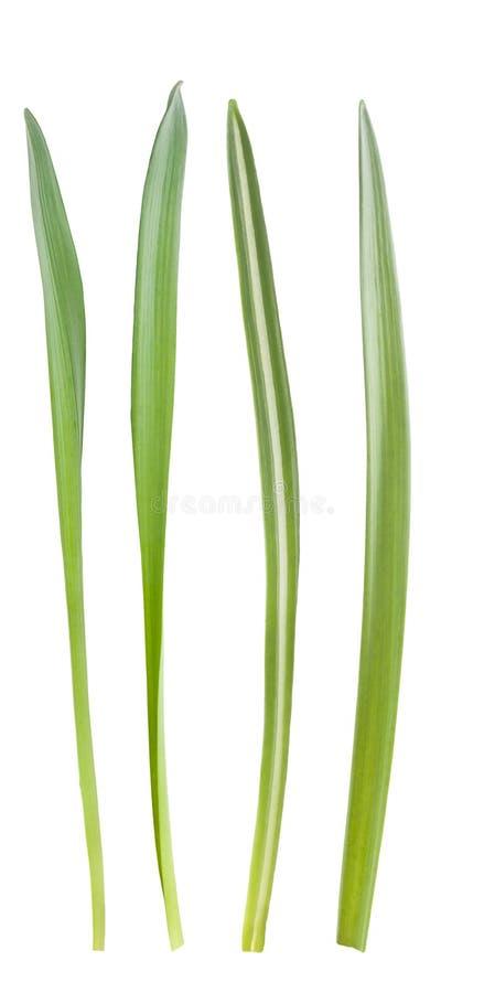 Лезвия травы стоковая фотография rf
