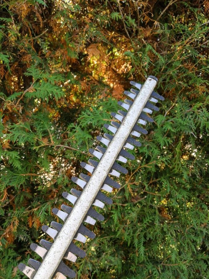Лезвия триммера изгороди уравновешивая загородку туи стоковые фотографии rf