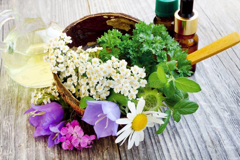 Лекарственные растения стоковая фотография