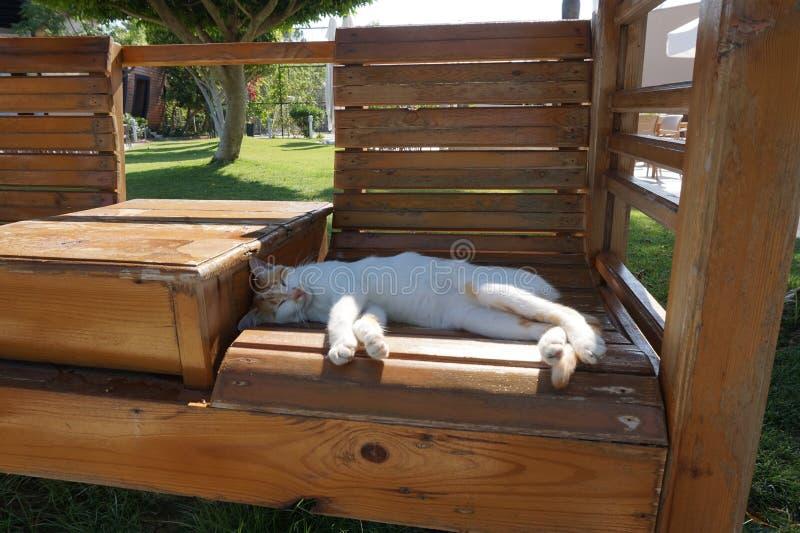 Ленивый бело-красный кот спать на старой деревянной скамье на зеленой предпосылке лужайки стоковые фотографии rf
