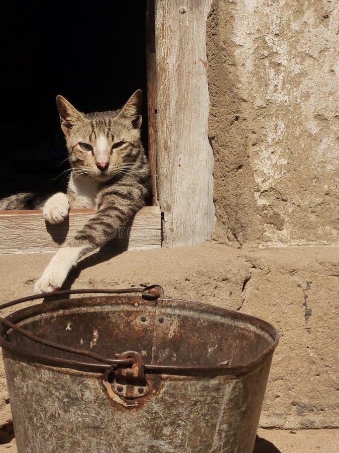 Ленивый кот в Африке стоковая фотография rf