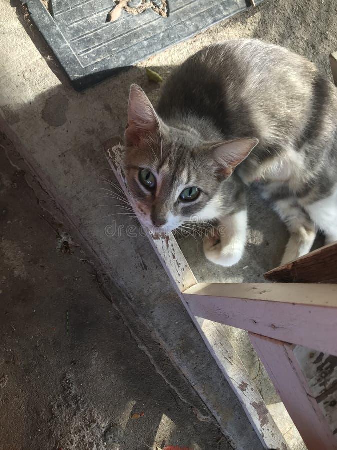 Ленивый кот на летний день стоковые изображения rf