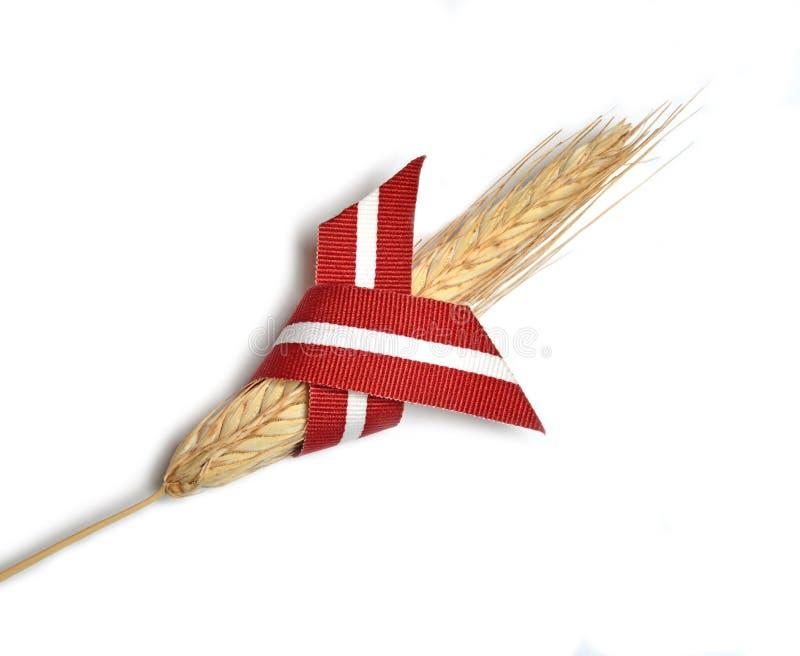 Лента и пшеница флага Латвии стоковое изображение