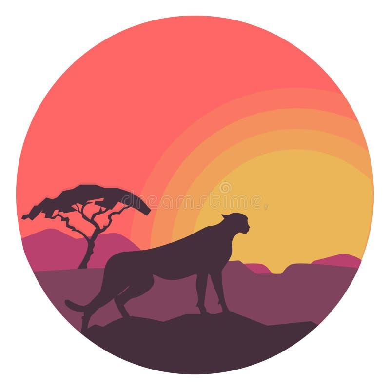 Леопард в сафари с заходом солнца в круге белизна вектора акулы иллюстрации предпосылки бесплатная иллюстрация