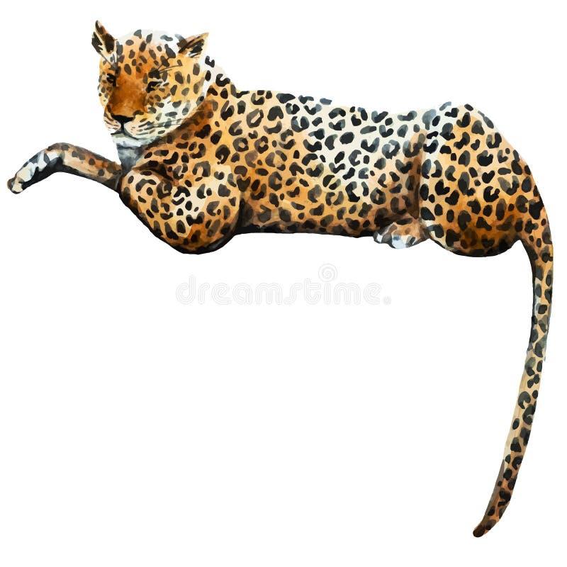 Леопард вектора акварели бесплатная иллюстрация