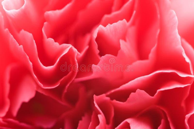 лепестки макроса гвоздики стоковая фотография rf