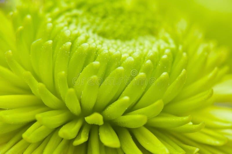 лепестки макроса цветка стоковая фотография rf