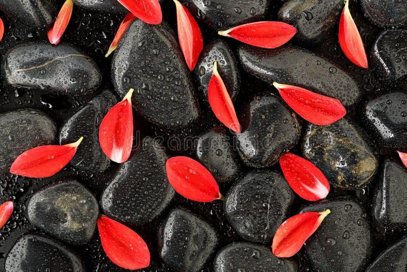 Лепестки на камнях стоковое фото