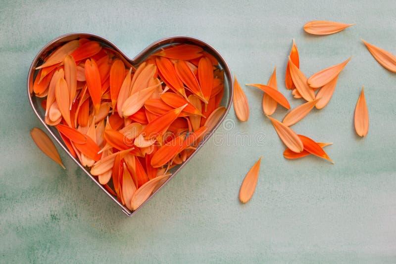 Лепестки оранжевой маргаритки gerbera стоковое фото