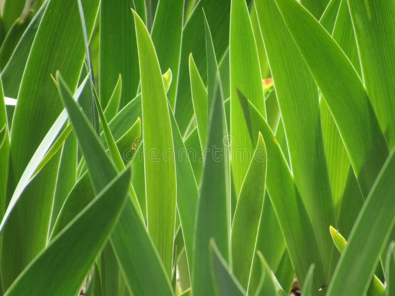 Лепестки радужки стоковое изображение rf