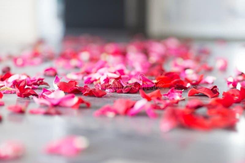 Картинки лепестки роз на полу
