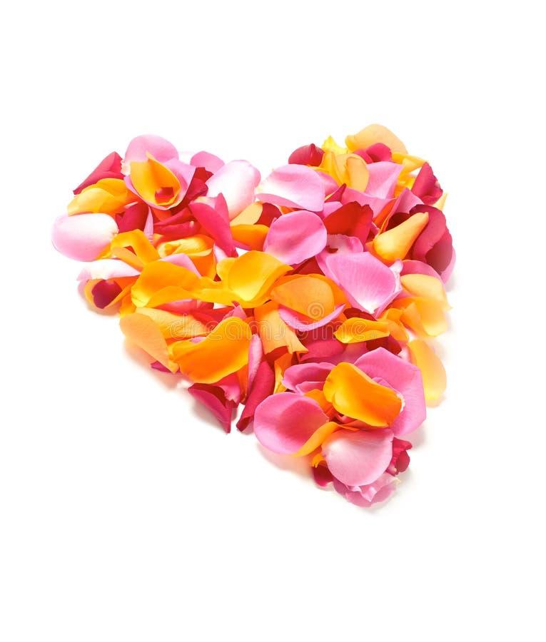 Лепестки розы стоковая фотография