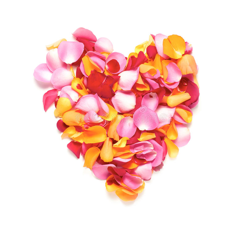 Лепестки розы стоковое изображение rf