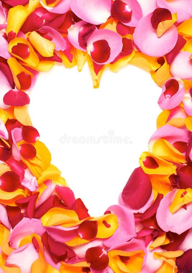 Лепестки розы стоковое фото rf