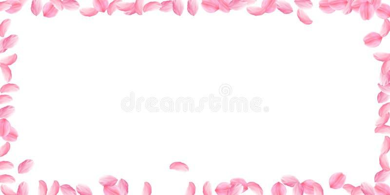 Лепестки Сакуры падая вниз Романтичные розовые яркие большие цветки Толстые лепестки вишни летания Широкая рамка бесплатная иллюстрация