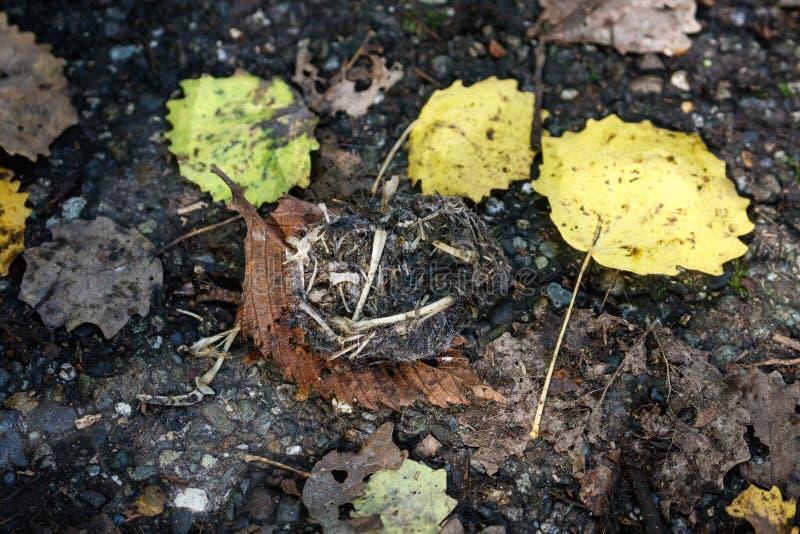 Лепешка и косточка сыча стоковое изображение