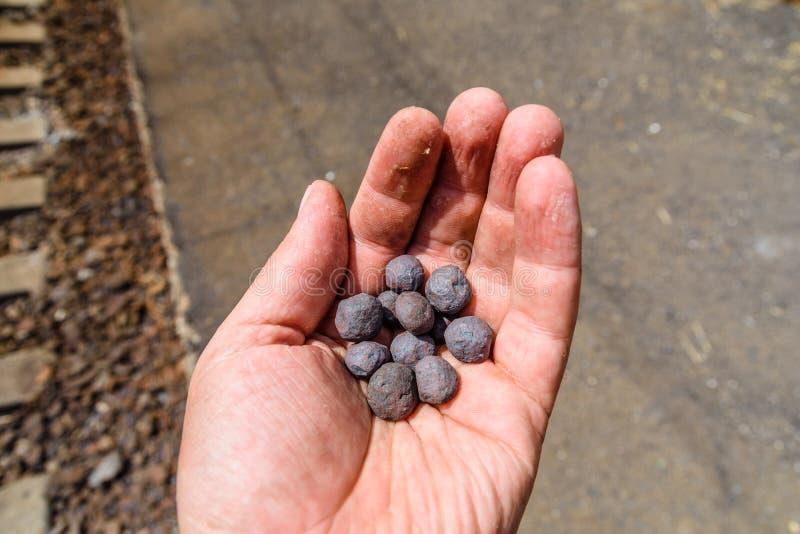 Лепешки taconite железной руды в руке работника стоковая фотография