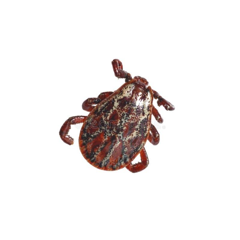 Лепта запятнанная красным цветом стоковое фото