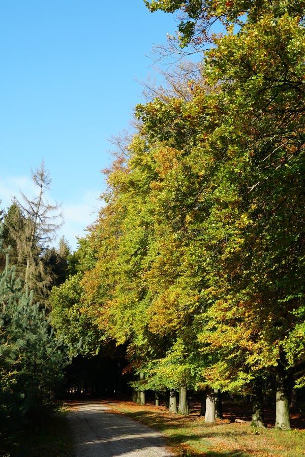 Леса осеннего цвета около Эде в Нидерландах стоковые изображения