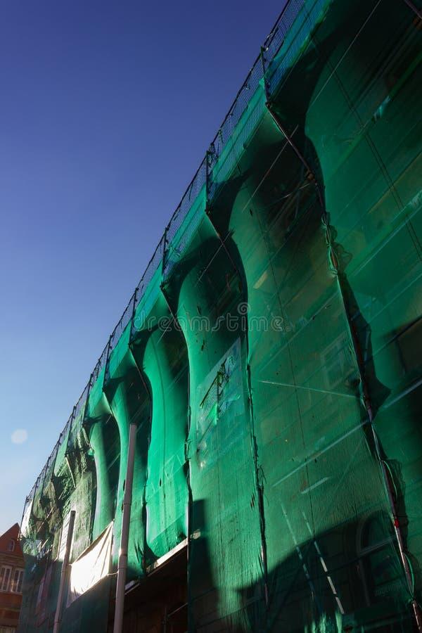 леса с зеленой крышкой на после полудня голубого неба стоковое фото rf