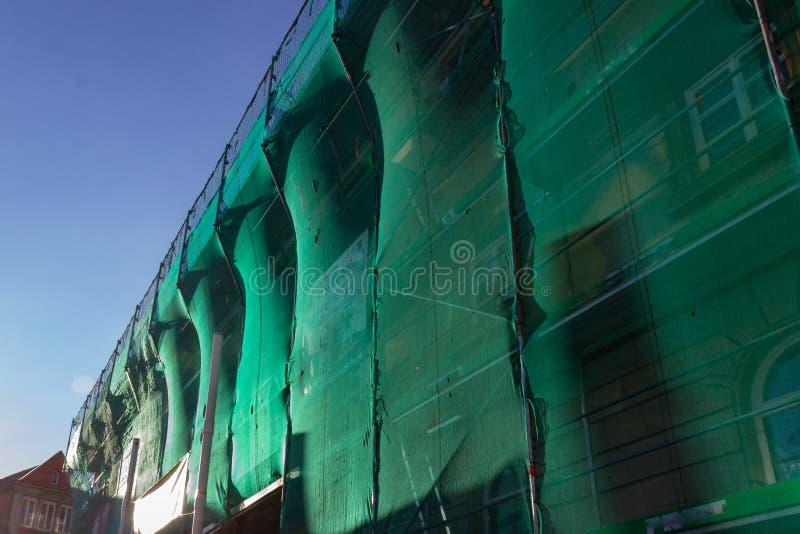 леса с зеленой крышкой на после полудня голубого неба стоковое изображение rf