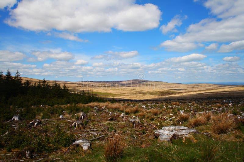 Леса Dartmoor Девон Великобритания стоковые фото