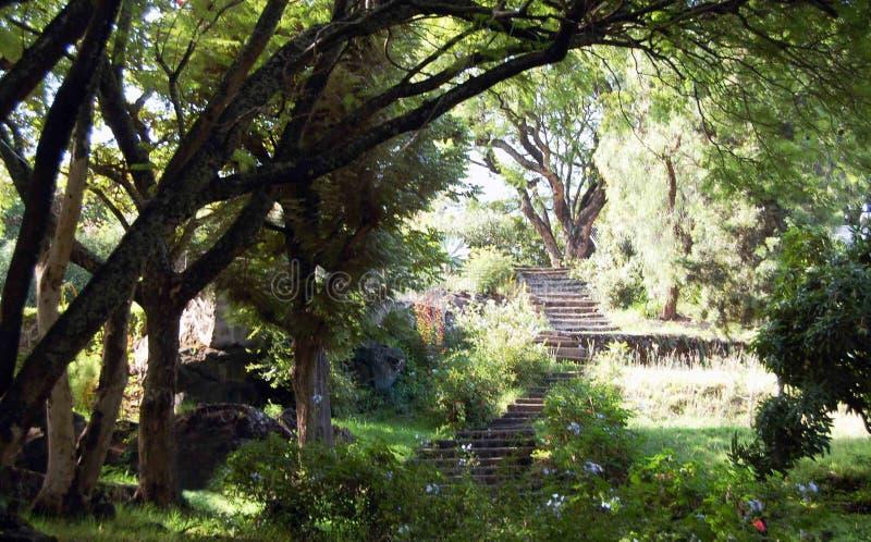 Лесистая сцена с лестницами Etiopia стоковые изображения rf
