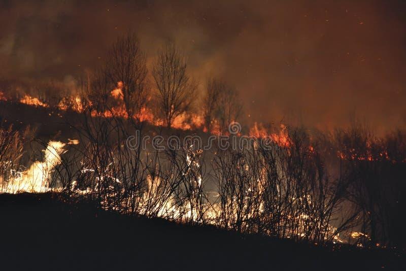 Лесной пожар 27 стоковые фото