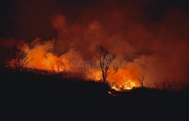 Лесной пожар 1 стоковое изображение rf