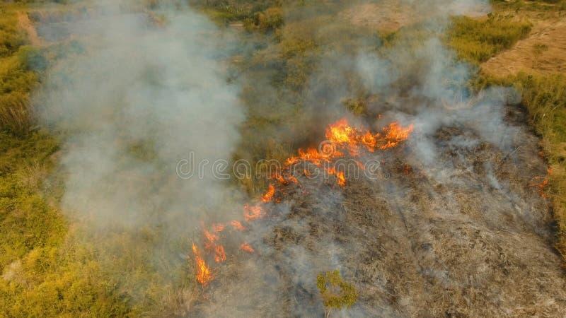 Лесной пожар вида с воздуха Busuanga, Palawan, Филиппины стоковая фотография rf