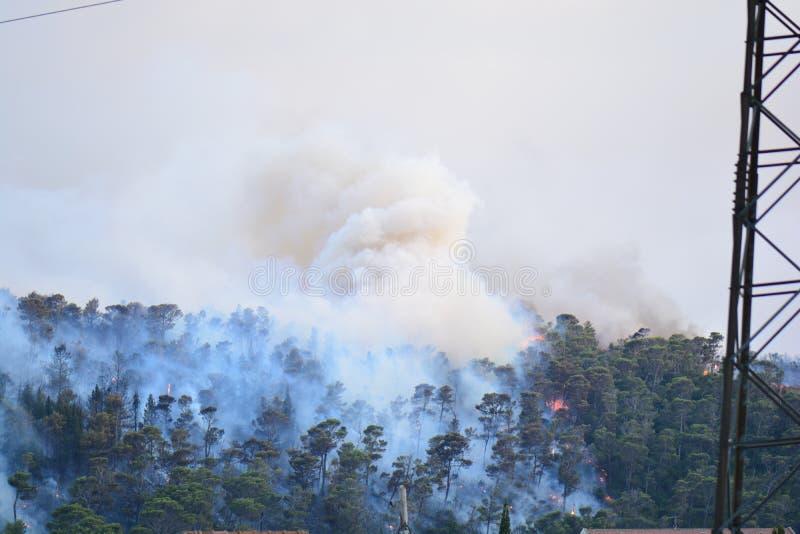 Лесной пожар Сгорели деревья после лесного пожара, загрязнения и много дыма стоковые фотографии rf