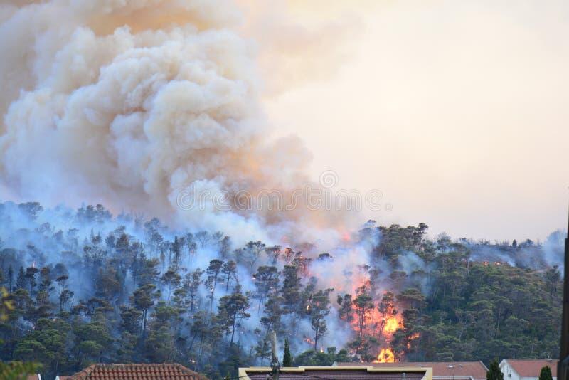 Лесной пожар Сгорели деревья после лесного пожара, загрязнения и много дыма стоковое изображение