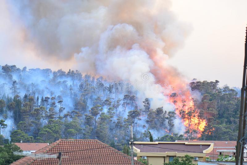 Лесной пожар Сгорели деревья после лесного пожара, загрязнения и много дыма стоковые изображения rf