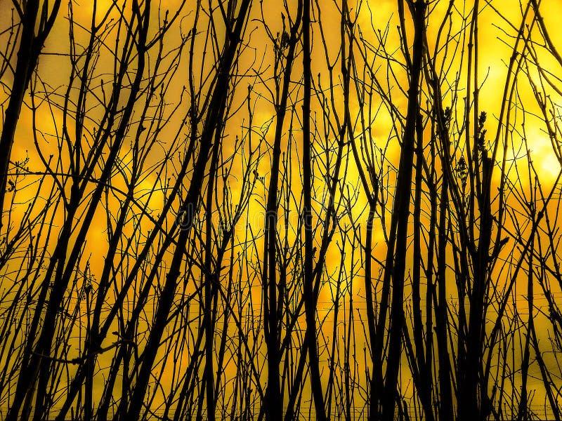 Лесной пожар, дым в природе стоковые изображения rf