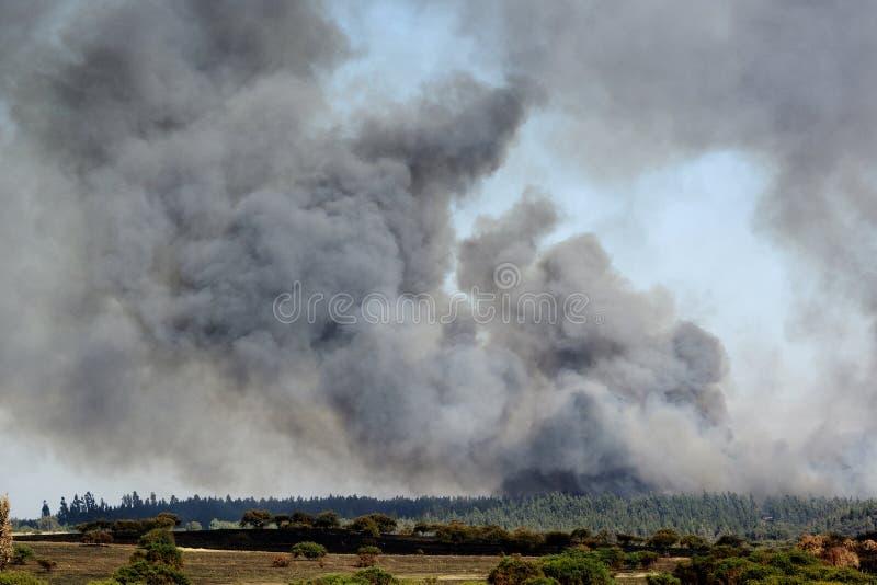 Лесной пожар стоковые изображения