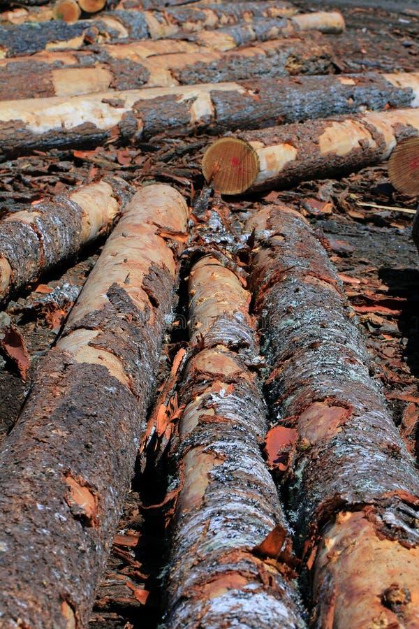 Лесной склад стоковые изображения
