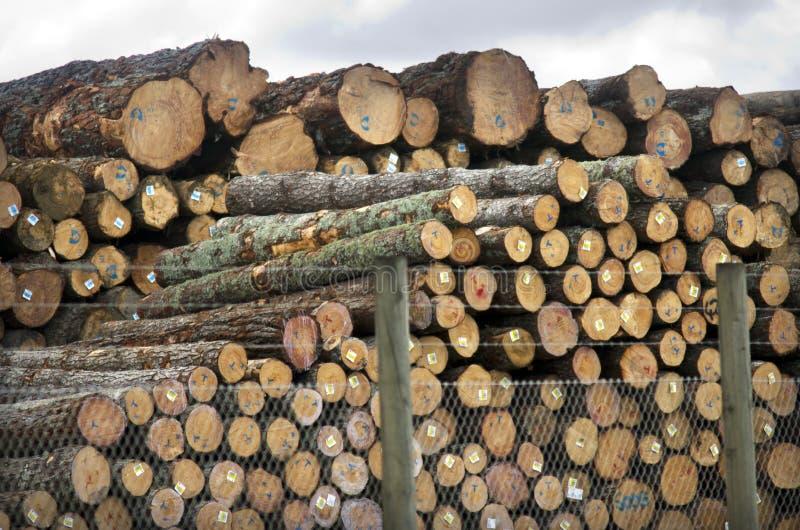 Лесные продукты Новой Зеландии стоковое фото rf