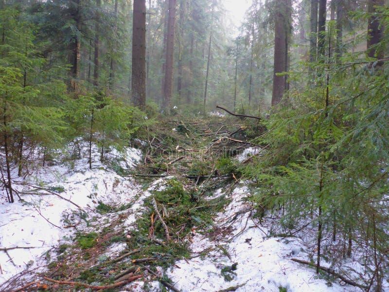 Лесохозяйство в зиме стоковое изображение rf