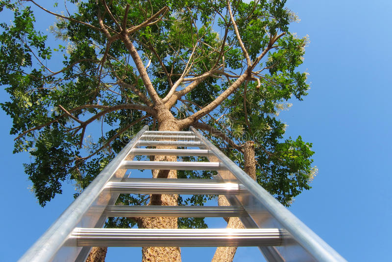 Лестница вверх против большого высокого дерева стоковое изображение rf