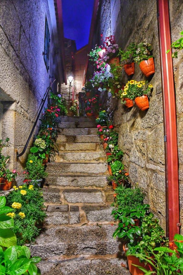 Лестница вечером с цветками Лестницы подъема к тайне в темном парке стоковая фотография
