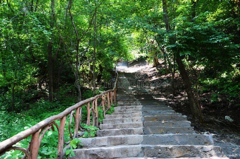 Лестница в лесе горы стоковые изображения